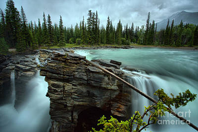 Photograph - Log Over Athabasca by Adam Jewell