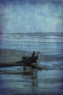 Photograph - Driftwood by Marilyn Wilson