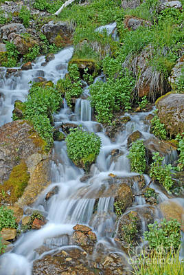 Logan Canyon Cascade Art Print by Dennis Hammer