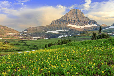 Photograph - Logan Pass Glacier Lilies by Jack Bell
