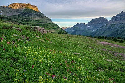 Photograph - Logan Pass Splendor by Morris McClung