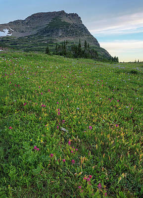 Photograph - Logan Pass Summer Bounty by Morris McClung