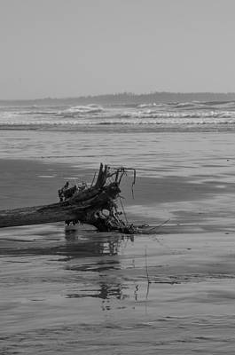 Photograph - Driftwood - Black And White by Marilyn Wilson