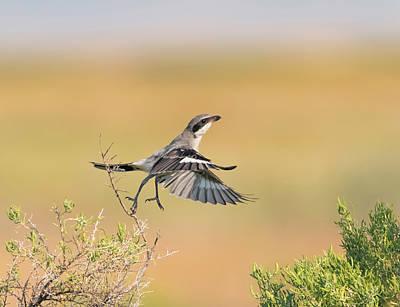 Photograph - Loggerhead Shrike Ballet by Loree Johnson
