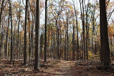 Photograph - Loggers Trail - Autumn - 2016 by Donald C Morgan