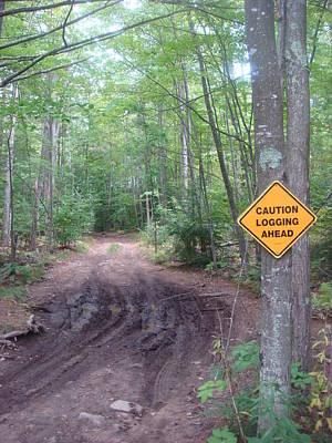 Logging Road Art Print