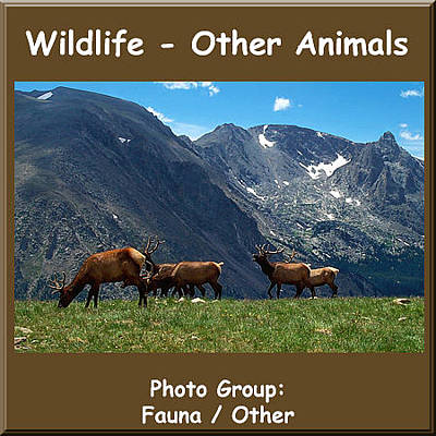 Photograph - Logo Other Animals by NaturesPix