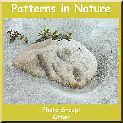 Photograph - Logo Patterns In Nature by NaturesPix
