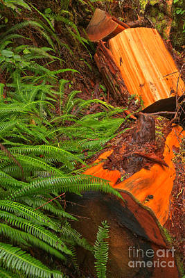 Photograph - Logs And Ferns by Adam Jewell