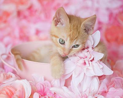Photograph - Loki Love Pink Floral H by Kelly Richardson