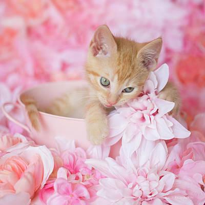 Photograph - Loki Love Pink Floral by Kelly Richardson