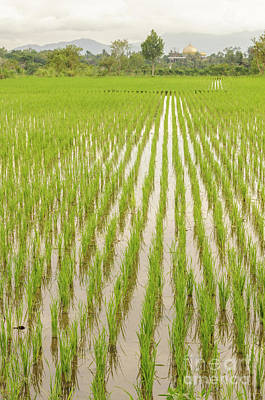 Photograph - Lombok Rice Fields 1 by Werner Padarin