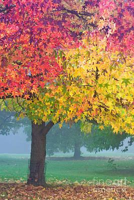 London Autumn Art Print by David Bleeker