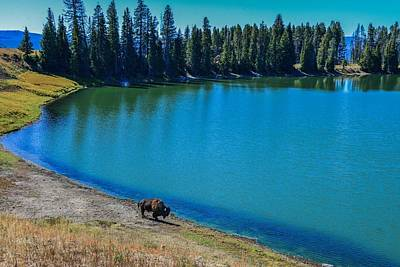 Photograph - Lone Bison By Lake, Yellowstone by Marilyn Burton