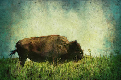 Photograph - Lone Bison On The Prairie by Ann Powell