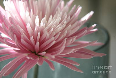 Photograph - Lone Bloom by Lynn England