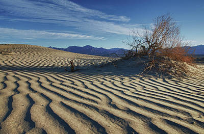 Photograph - Lone Bush Death Valley Hdr by James Hammond