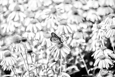 Photograph - Lone Buterfly by David Stasiak