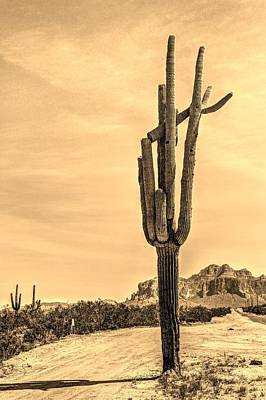 Digital Art - Lone Cactus by Dan Stone