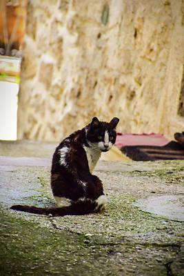 Photograph - Lone Cat by Alessandro Della Pietra