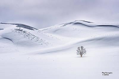 Photograph - Lone Cottonwood by Peg Runyan