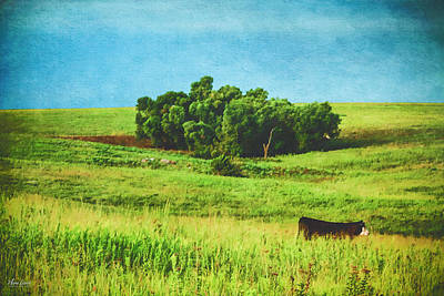 Photograph - Lone Cow On The Prairie by Anna Louise