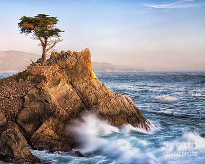 Photograph - Lone Cypress by Anthony Michael Bonafede