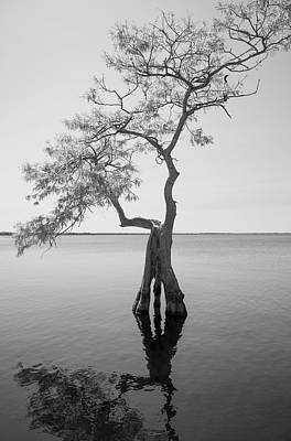 Photograph - Lone Cypress - Blue Cypress Lake by John Black