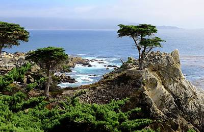 Photograph - Lone Cypress by Corinne Rhode