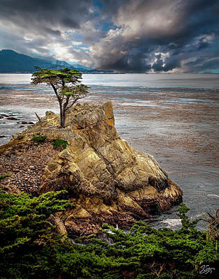 Photograph - Lone Cypress In Monterey Bay by Endre Balogh