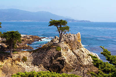 Photograph - Lone Cypress by Lou Ford