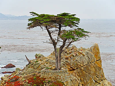 Photograph - Lone Cypress Study 1 by Robert Meyers-Lussier