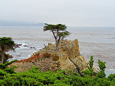 Photograph - Lone Cypress Study 2 by Robert Meyers-Lussier