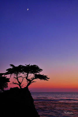 Photograph - Lone Cypress Tree At Pebble Beach by Tim Kathka