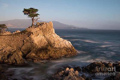 Photograph - lone Cypress Tree by Vincent Bonafede