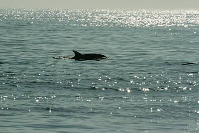 Lone Dolphin Art Print by Allan Levin