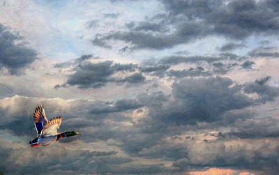 Game Bird Digital Art - Lone Duck In Flight by Randy Steele