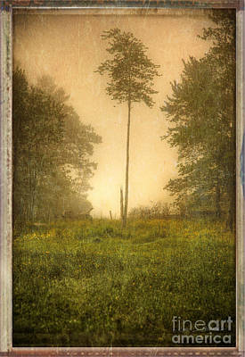 Photograph - Lone Fog Tree In The Meadow by Craig J Satterlee