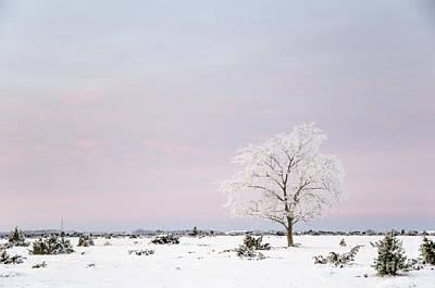 Photograph - Lone Frosty Tree In A Winter Landscape by Kennerth and Birgitta Kullman