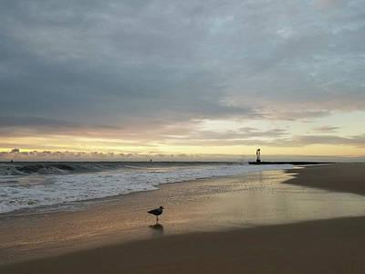 Photograph - Lone Gull At Dawn by Robert Banach