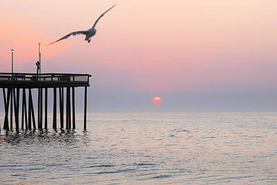 Photograph - Lone Gull At Sunrise by Robert Banach