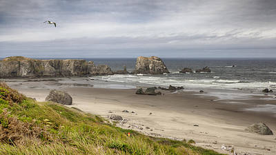 Photograph - Lone Gull - Bandon Beach by Harold Rau