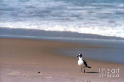 Photograph - Lone Gull by Nicki McManus