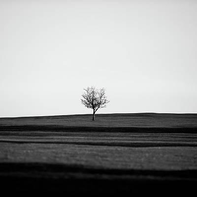 Photograph - Lone Hawthorn Tree V by Helen Northcott