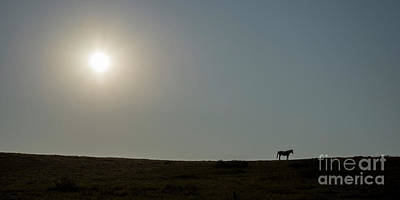 Animals Photos - Lone Horse at Teddy Roosevelt National Park by Twenty Two North Photography