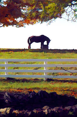 Keeneland Photograph - Equine Solitude by Sam Davis Johnson