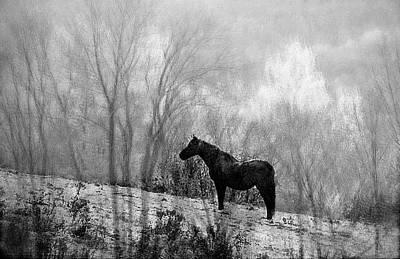 Photograph - Lone Horse by Sandra Silva