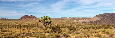 Photograph - Lone Joshua Tree - Pleasant Valley by Peter Tellone