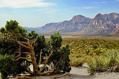 Photograph - Lone Juniper At Red Rock by Craig Wood