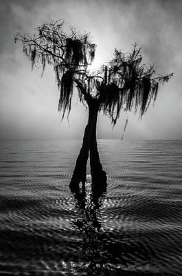 Cypress Photograph - Lone Lake Tree by Stefan Mazzola